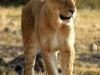africa2009_002
